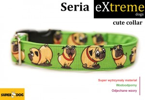 Obroża dla psa: Cute collar